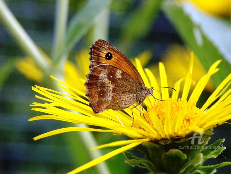 Martine Maury - repas du papillon