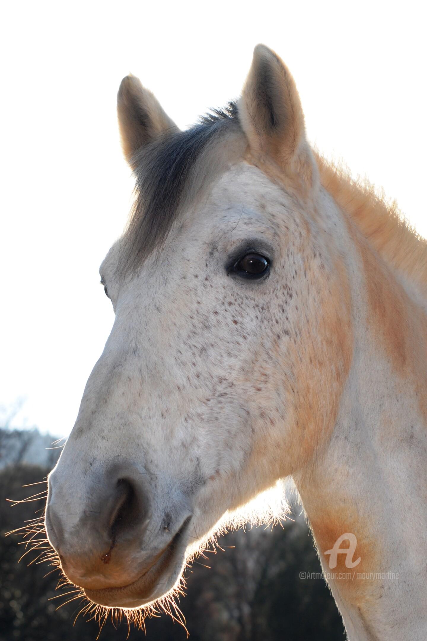 Martine Maury - le poney connemara