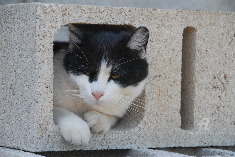 Martine Maury - le confinement 2020 vu d'un chat