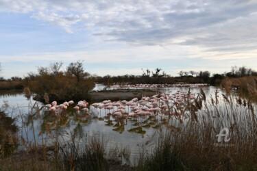 Parc Ornithologique de l'étang de Gau