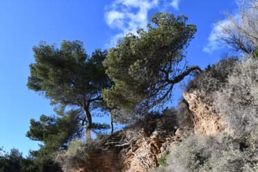 pins et ciel bleu