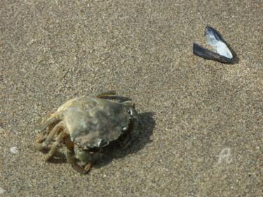 le crabe et la moule
