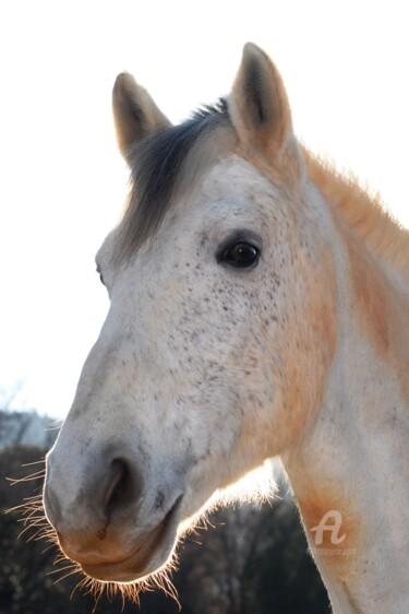 le poney connemara
