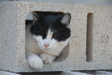 le confinement 2020 vu d'un chat