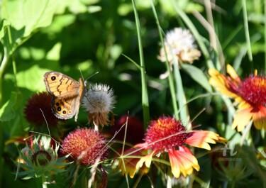 Papillon sur les gaillardes