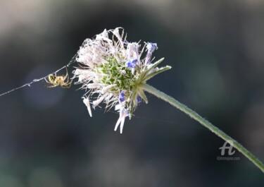 fleur et araignée