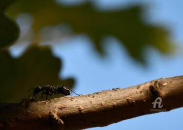 la fourmi aussi est dans l'arbre