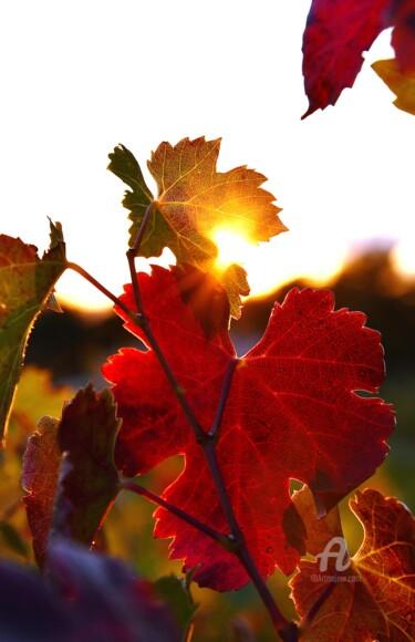 Contre jour dans les vignes
