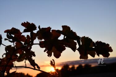 ligne d'automne