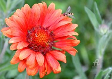 la gaillarde et l'abeille