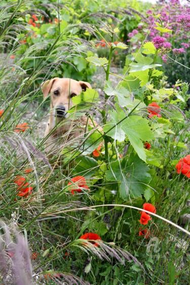vickye dans les vignes